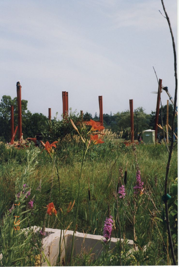Image of flowers and the steel rafters at the start of construction